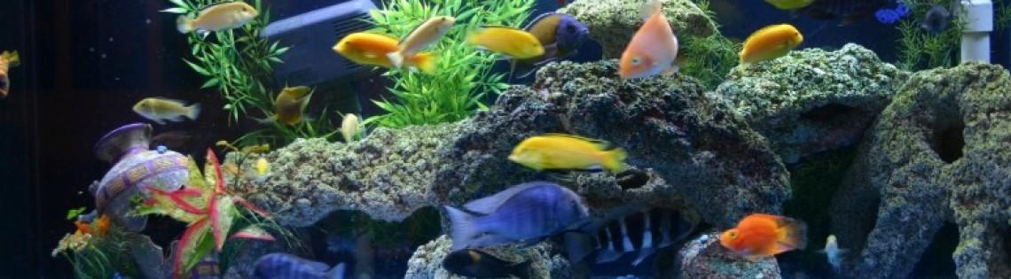 'Правильно выбираем и используем герметик для ремонта аквариума