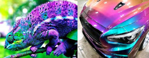 хамелеон и автомобиль
