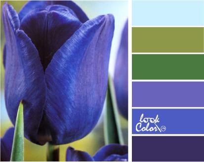 сине фиолетовый цвет