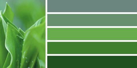 бледная зелень цвет