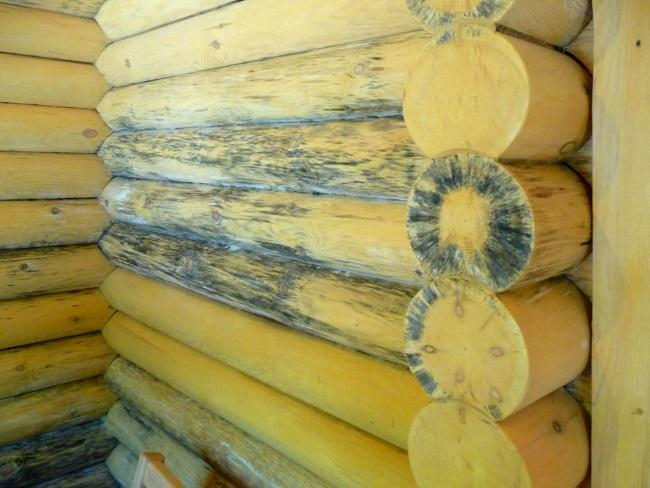 синева на древесине