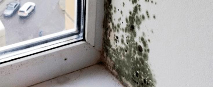 грибок и плесень