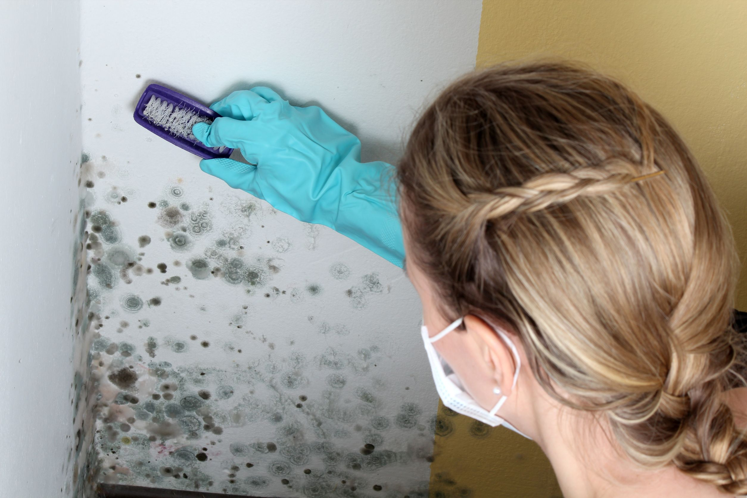 уборка грибка на стенах